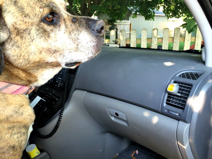 Febreeze car vent air freshener in action for stinky dog smells